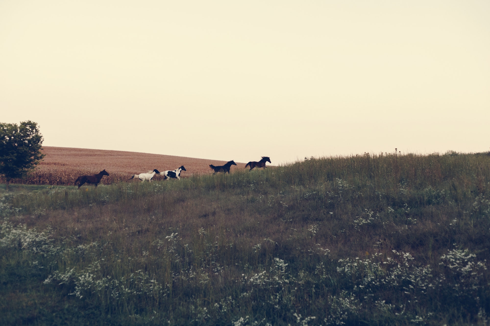 Horses running on a hill